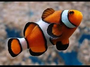 The 15 most beautiful fish in the world - YouTube