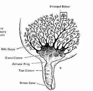 Lactation Physiology  11-17