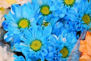 Blue Yellow Flowers 5 Widescreen Wallpaper ...