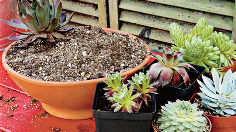 planting succulents in containers how to plant succulents in containers southern living 4262