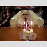 Happy Birthday Cakes With Candles For Best Friend   499 x 374 animatedgif 433kB