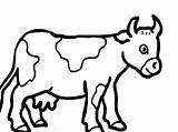 Cow Coloring Printable Animals Farm sketch template
