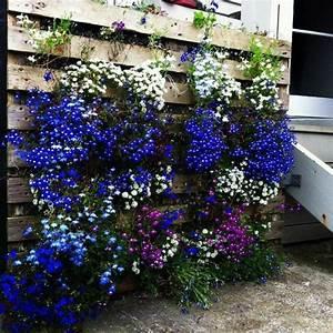 les 25 meilleures idees de la categorie mur vegetal With idee deco de jardin exterieur 4 plantes exotiques pour jardin et terrasse en vente chez