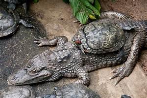Tiere Für Aquarium : symbiose symbiose tiere view fotocommunity ~ Lizthompson.info Haus und Dekorationen