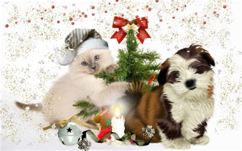 Happy Wallpaper Cats And Dogs cat and photography abstract background
