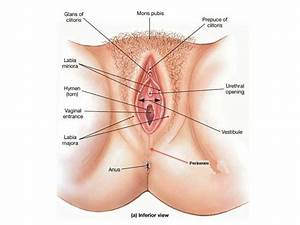 Video  Image Link  External Female Genitalia