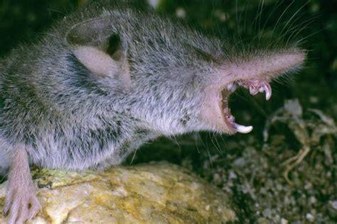 Mäuse Im Haus Bekämpfen Krankheiten 3