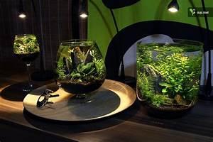 Süßwasserfische Fürs Aquarium : die besten 25 nano aquarium ideen auf pinterest ~ Lizthompson.info Haus und Dekorationen
