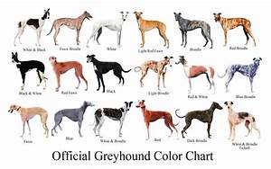 Dog Breed Chart With Names Greyhound Color Breeds - Litle Pups
