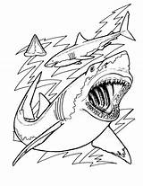 Coloring Pages Sharks Shark Printable sketch template