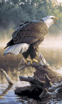 Animated Eagle Wallpaper - animated 240x400 171 eagle 187 cell phone wallpaper