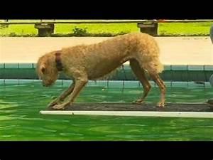 Hundeschwimmen Im Freibad PETA Doovi