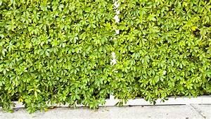 Bambou Artificiel Leroy Merlin : prix d 39 une haie artificielle ~ Dailycaller-alerts.com Idées de Décoration