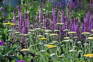 Gemüse Pflanzen Was Passt Zusammen : farb und formkontraste im staudenbeet gartenzauber ~ Lizthompson.info Haus und Dekorationen