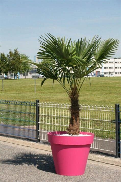 palmier trachycarpus fortunei 2 50 m avec pot toscane eda diam 232 tre 100 cm fushia esprit