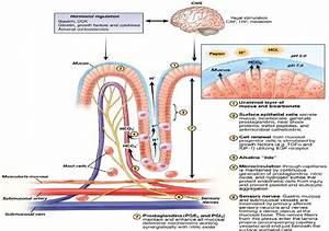 Gastric Mucosal Defense Mechanism