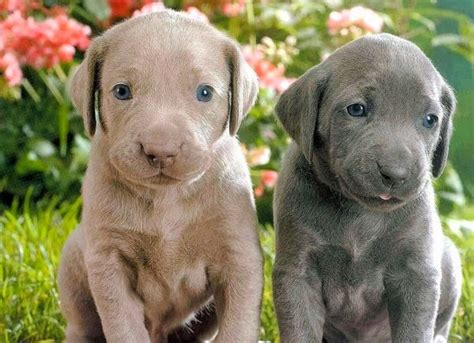 fotos de filhotes de cachorros mais fofos  mundo toda