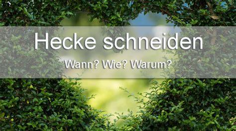 Hecke Schneiden Tipps by Tipps Tricks F 252 Rs Hecke Schneiden Wann Wie