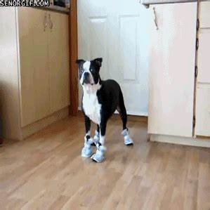 Walking Funny GIFs - Find & Share on GIPHY