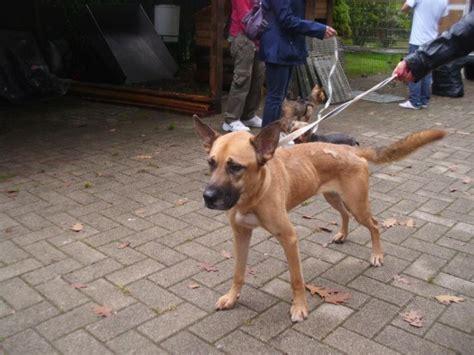 adozioni cani su petsblog