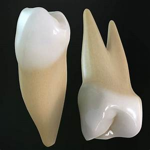Dentition And Types Of Teeth