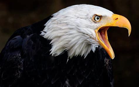 eagles capturing drones dangerous  stupid experts