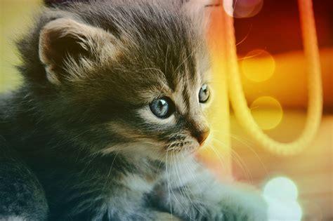 gatitos hd fondoswikicom