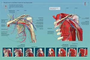 Anatomy 360  The Ultimate Visual Guide To The Human Body