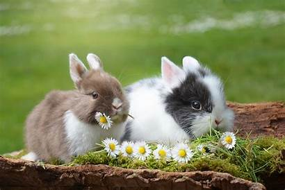 Bunnies Adorable Sponsorship Equity Fiscal Want Read