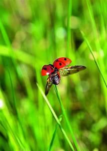Käfer Im Garten : marienk fer quartier bl tenrausch ~ Lizthompson.info Haus und Dekorationen