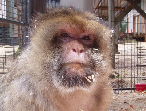 The Gallery For --> Fat Ugly Monkeys