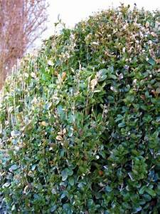 Buchsbaum Befall Raupen : buchsbaum krankeitsbefall pflanzenkrankheiten sch dlinge green24 hilfe pflege bilder ~ Watch28wear.com Haus und Dekorationen