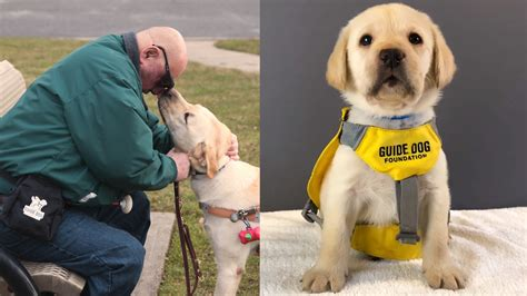 The Guide Dog Foundation for the Blind celebrates 75 years ...