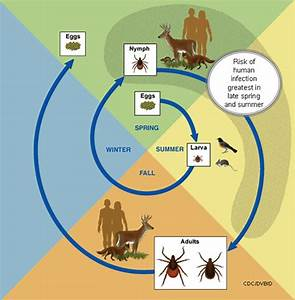 How Ticks Spread Disease