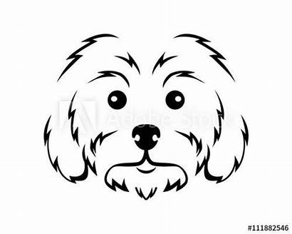 Maltese Dog Line Drawing Breed Puppy Diese
