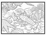 Coloring Lobster Colouring Adult Single Sea Lobsters Animals Outline Boat Creatures Printable Drawing Sheet Animal Pdf sketch template