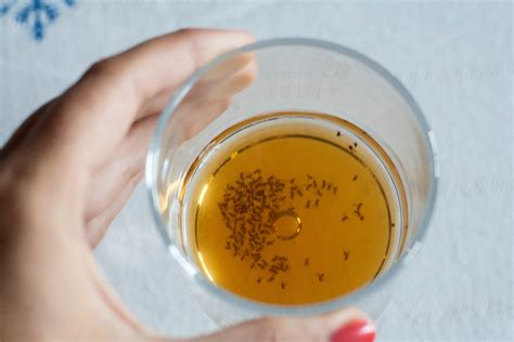 fruit flies in kitchen sink 4 effective methods to get rid of fruit flies 6762
