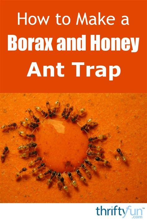 making  borax  honey ant trap thriftyfun