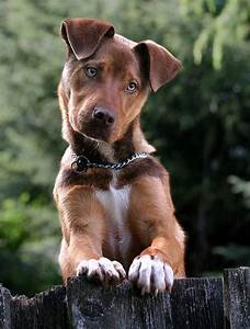 Mix Breed Dog. So cute! Love it ♡... Re-pin by StoneArtUSA ...