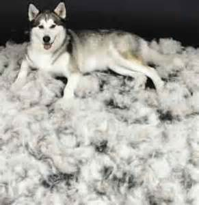 5 tips to managing shedding dogs