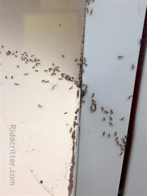 tiny ants in kitchen around sink tiny ants in bathroom 28 images surprising tiny ants
