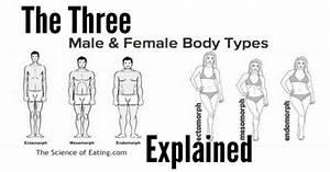 The Three Body Types Explained   Female body types ...