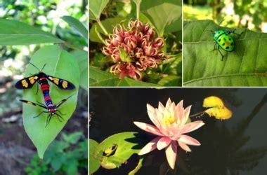 Native Biodiversity Garden ? Teenvira, Alibaug