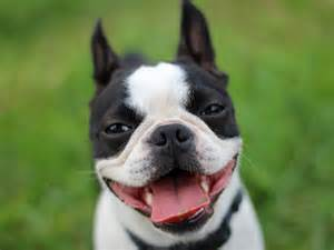 Best Dog Name Ever