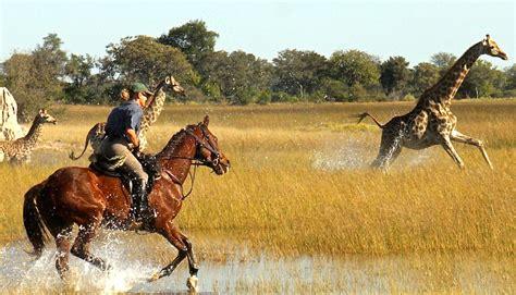 horse safaris safari okavango riding horseback botswana africa african christmas ride wildlife want rider cry association courtesy afktravel giraffe
