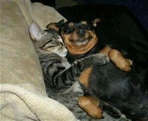 12 Cats and Dogs That Are in Love