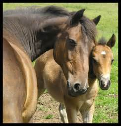 Mare and her foal - Edited by Spirit-Of-The-Horse on ...