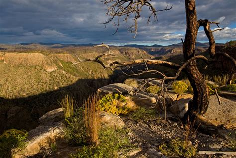 fires grow   landscape appears   west
