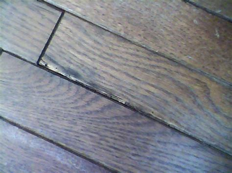 Cupping Engineered Wood Floors by Infested Hardwood Flooring How To Prevent Re Infestation