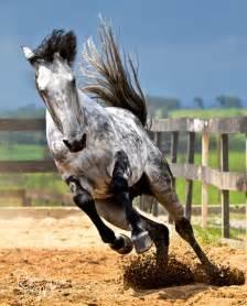 running free - Horses Photo (30431451) - Fanpop
